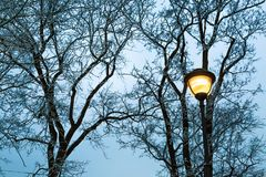 Frost on the bare branches of trees and street light at dark winter evening in city park. Silhouette of woods and street post. Seasonal and holiday background Royalty Free Stock Photography
