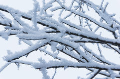 Frost on bare tree branches Royalty Free Stock Images