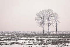 Frost Bare Tree In Winter. Row of bare trees in minimal winter landscape Royalty Free Stock Photography