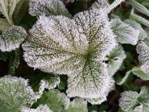 Frost on beautyfull wild flower plant stock image