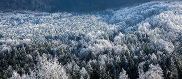 Frost bedeckte Bäume im Winter Stockbild