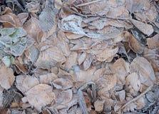 Frost-Blätter stockfoto