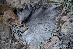 Frost-Blatt auf gefrorenem Boden lizenzfreie stockfotografie