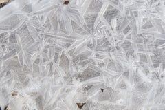 Frost-Blumen auf einer Pfütze von Wasser 1 lizenzfreies stockfoto