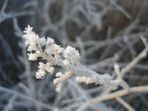 Frost branch Stock Image