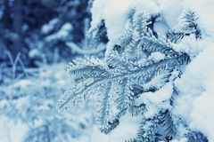 Frost on branch Stock Image