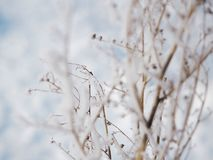 Frost on a branch on a frosty day.  stock photos