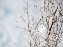 Frost on a branch on a frosty day.  stock photo