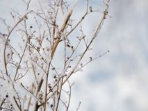 Frost on a branch on a frosty day.  royalty free stock photography