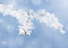 Frost on branch Royalty Free Stock Photos