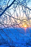 Frost on the branches. In the rays of the rising sun Stock Images