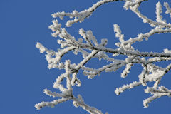Frost on branches Royalty Free Stock Images