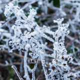Frost on branches. Abstract background from ice nature Royalty Free Stock Photo