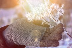 The frost on the branches. The hand of a woman in a glove gently touches the sharp needles of frost on a branch in the sun. The frost on the branches. The hand stock image