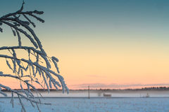Frost On The Branches. In the middle of the winter, if it gets a bit warmer, the for rises on the fields. Beautiful background for the frosty branches royalty free stock photo