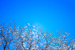 Frost branches over blue sky Royalty Free Stock Image