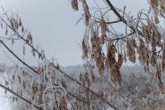 Frost on a branches. Russian provincial natural landscape in gloomy weather. Selective focus. Shallow depth of field.  stock image