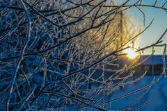 Frost on the branches shimmers in the rays of the setting sun. Frost on the branches of a tree standing on the road leading to the house, flickers in the rays of royalty free stock photo