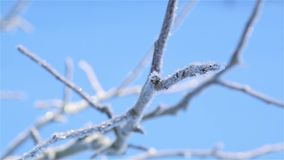 Frost on the branches of a tree in motion in severe frost 1920 stock footage