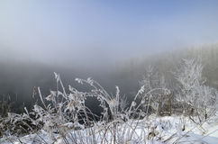 Frost on branches of trees and grass on the background of a lake Royalty Free Stock Images