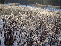 Frost on the bush Stock Images