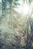 Frost caliente Imagenes de archivo