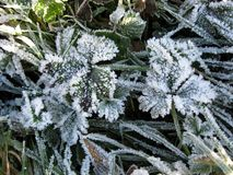 Frost chez Charles Wood Image stock