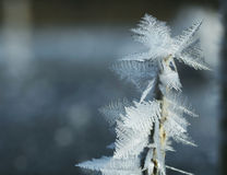 Frost close-up Royalty Free Stock Photography