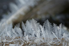 Frost close-up Stock Image