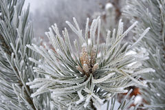 Frost - close-up Stock Images
