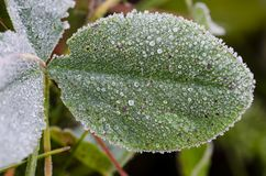 Frost on clover leaf at autumn royalty free stock images