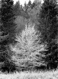 Frost cobriu a árvore - gravada com filme análogo fotos de stock