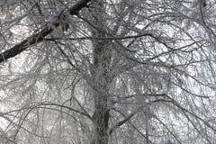 Frost cobriu árvores foto de stock