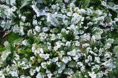 Frost cobriu a grama Imagem de Stock