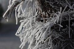 Frost cobriu o tronco da palma imagem de stock