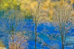 Frost a couvert des arbres en hiver. Photo libre de droits