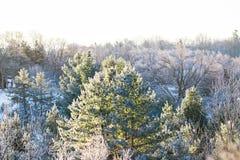 Frost a couvert des arbres un matin froid d'hiver photographie stock libre de droits