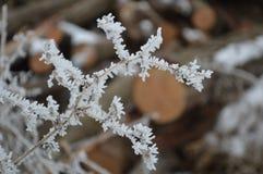 Frost a couvert des brindilles se ferment  photo stock