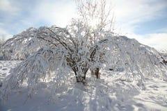 Frost a couvert l'arbre Photographie stock libre de droits