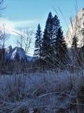 Frost a couvert l'herbe à la base de la montagne de Yosemite Photo stock
