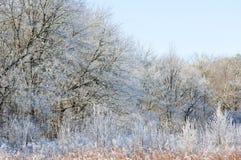Frost a couvert le champ dans la crique de Cades Photographie stock libre de droits