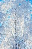 Frost couvrant les branchements d'arbre nus Image stock