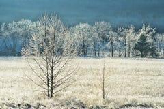 Frost couvre une barrière et un champ dans la crique de Cades image stock