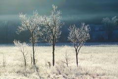 Frost couvre une barrière et un champ dans la crique de Cades photographie stock libre de droits