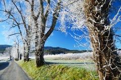 Frost couvre une route et un champ dans la crique de Cades photographie stock