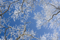 Frost cover branches Royalty Free Stock Photo
