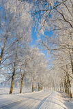 Frost covered birch tree. Country roud with frost covered birch tree allay in winter Stock Photography
