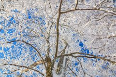 Frost covered branche Royalty Free Stock Images