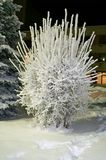 Frost-covered fantastic shrub. Ice.Snow. Night. royalty free stock image