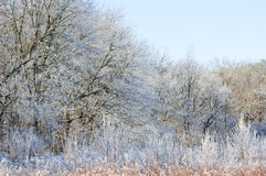 Frost covered field in Cades Cove. Royalty Free Stock Photography